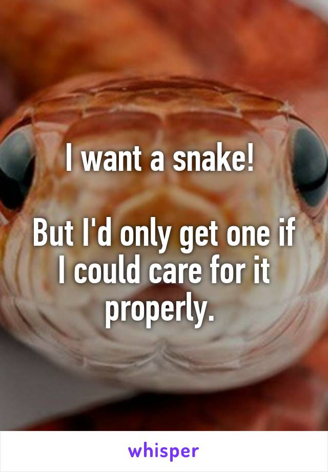 I want a snake!   But I'd only get one if I could care for it properly.