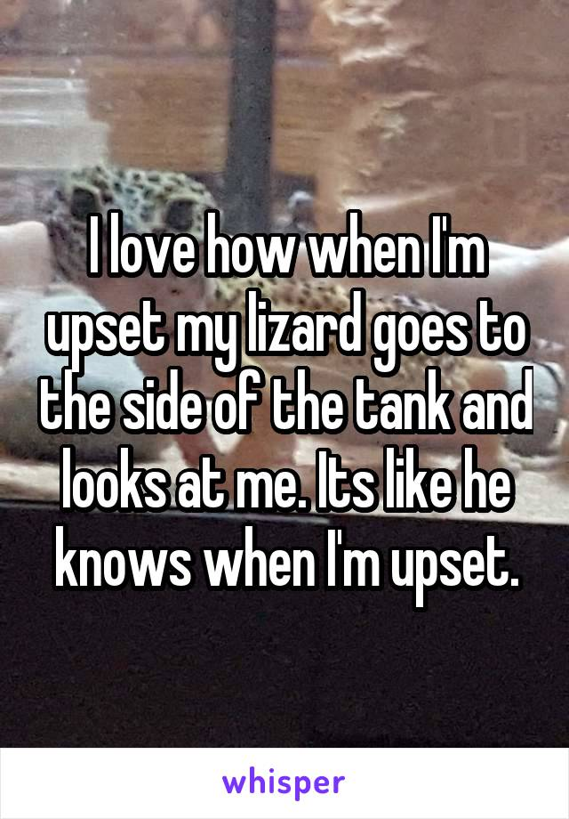 I love how when I'm upset my lizard goes to the side of the tank and looks at me. Its like he knows when I'm upset.