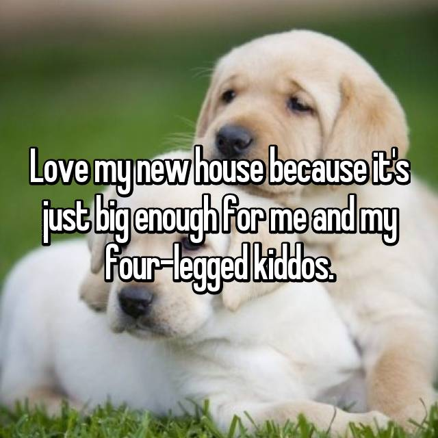 Love my new house because it's just big enough for me and my four-legged kiddos.