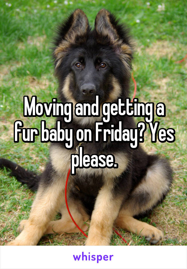 Moving and getting a fur baby on Friday? Yes please.